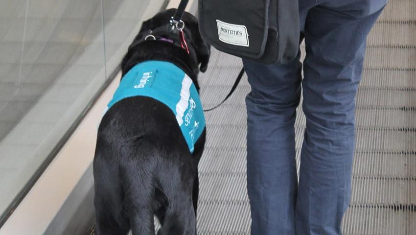Assistance-dog.JPG