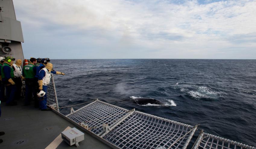 Australian-Humpback-Whales.jpg